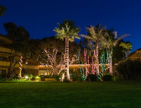 Beautiful Ways to Spread Lights to Your Trees