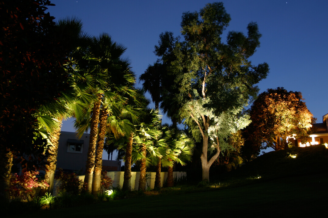 Shine Bright: Seven Ideas to Help You Accent Your Trees with Outdoor Lighting